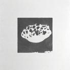 ミドリフグといっしょ ( kurukuru0521 )