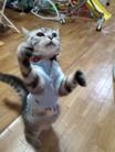 猫パンチ ( Nabe123 )