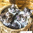 墨ねこさんしょっぷ ( The-cat-is-full-of-rats )