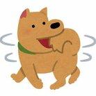 犬犬さん❕ ( inuno_nakama )