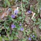 水彩ガーデン ( suisai-garden )