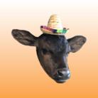 Happy cows♪ ( ARF )