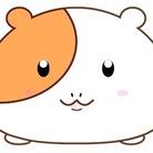 モルモットのモルちゃん ( guineapigmarmot )