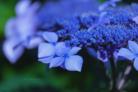 動物とお花と街の写真グッズやさん。 ( kaosu2525 )