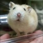 ぼくハムえもん (ハムスターグッズ) ( Ham-emon )