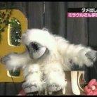 Wataru ( wadaiko21 )