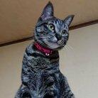 デイジー☆猫バカ ( 7411_DAISY )