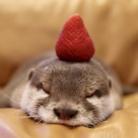 kinaco the otter