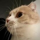Need Fish ( Needfish )