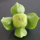 MARU商店 ( wisteria2020jp )