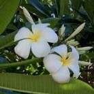 Non heels Hawaii ( Mintyhawaii )