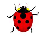 てんとう虫 ( ladybug )