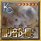 千代世 ( kothi53 )