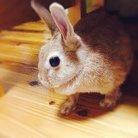 やわらかいタワシ ( Rabbit30413 )