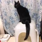 空(ほしだ園地付近で黒猫見ませんでしたか ( sora_meguringo_ )